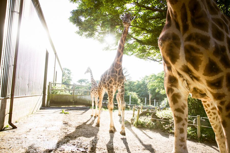 paignton zoo-2014-002