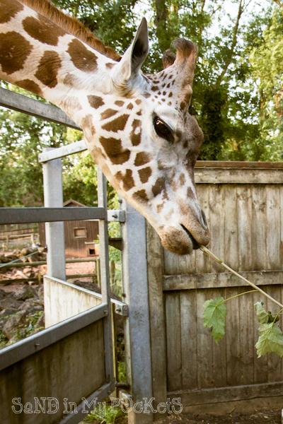 paignton zoo-2014-003
