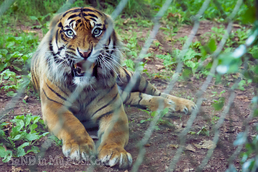 paignton zoo-2014-008
